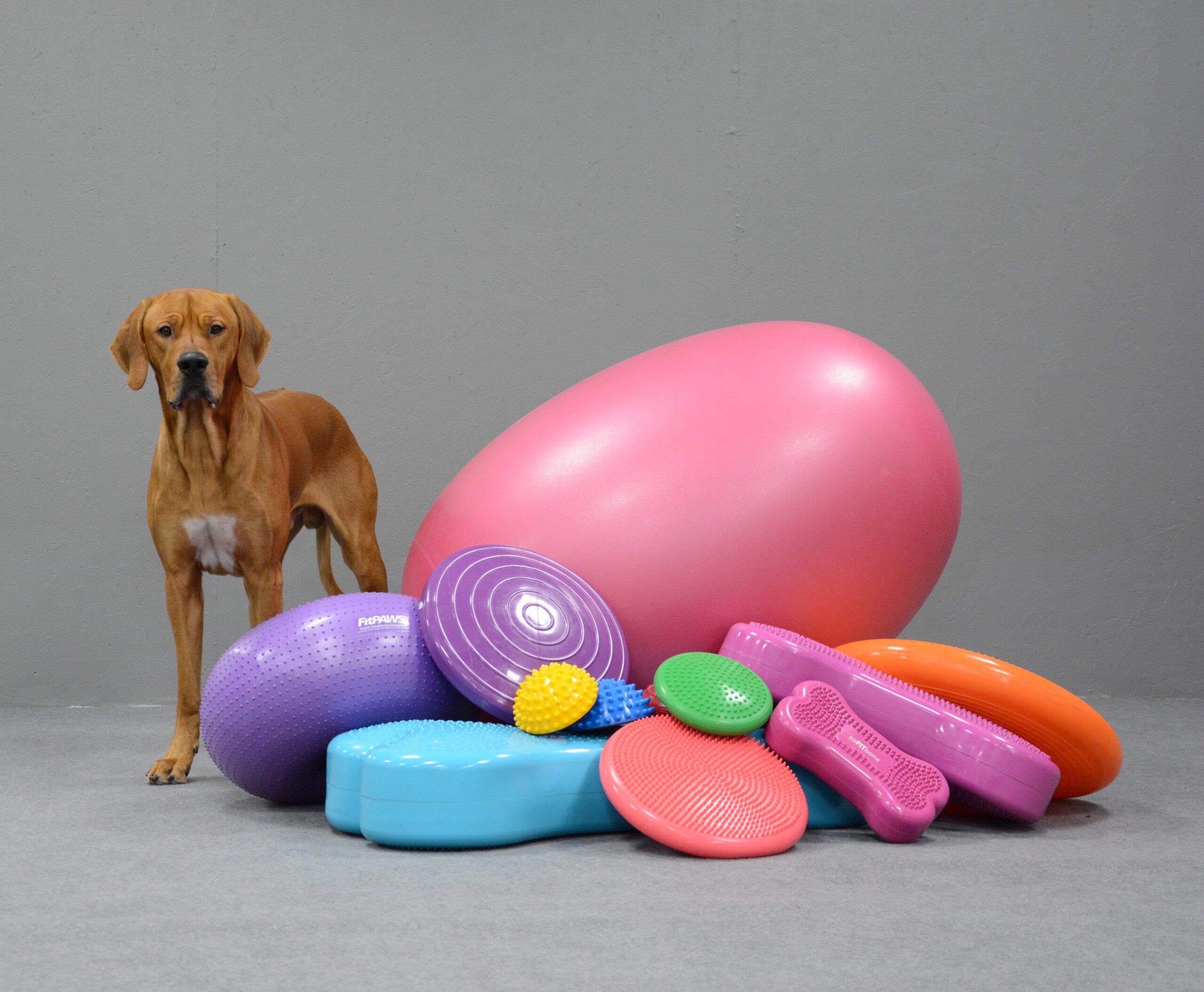 balansboll kurs för din hund