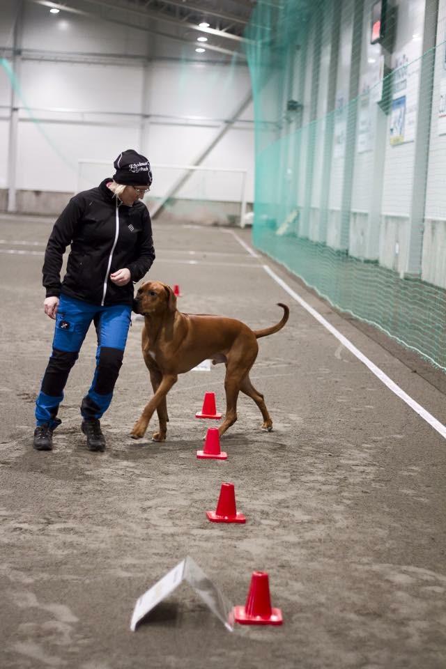 rallylydnad kurs för din hund